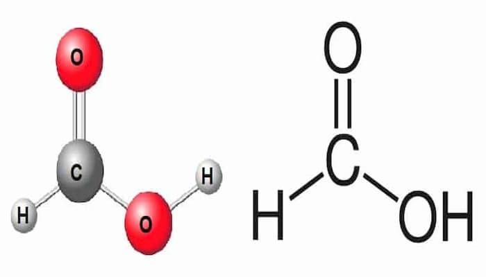 ácido montanico