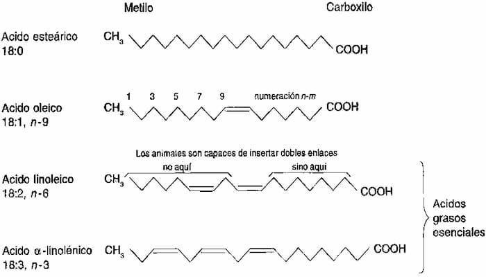 ácido lignocérico