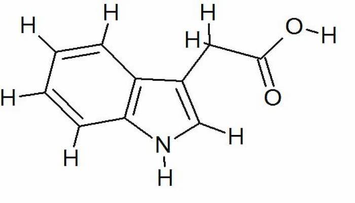 ácido indole-3-acético